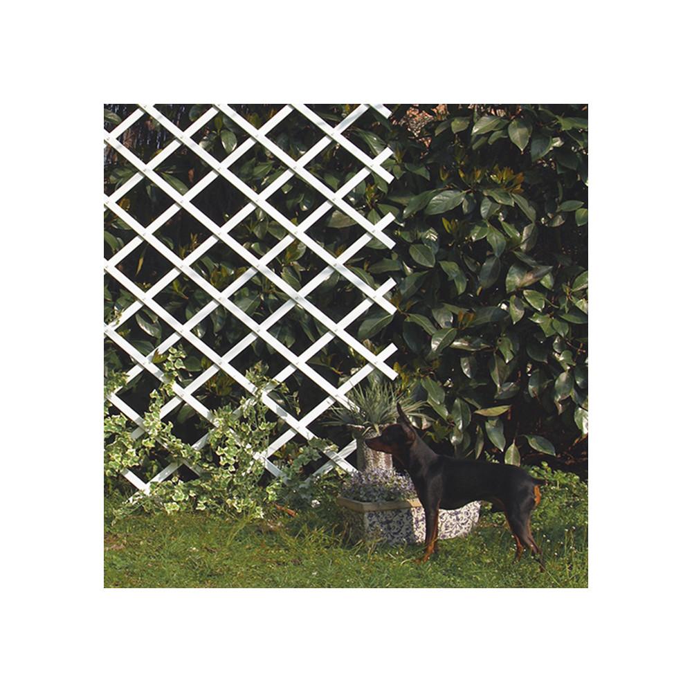 Celos a extensible para colocar en el jard n colores Celosia para jardin