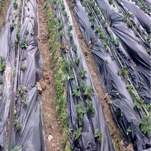 Plástico invernadero 500 GALGAS - 65 M X 12 M